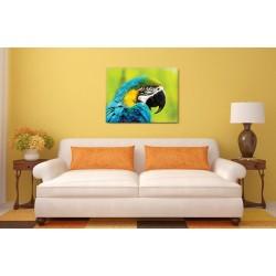 Sárga-kék arapapagáj
