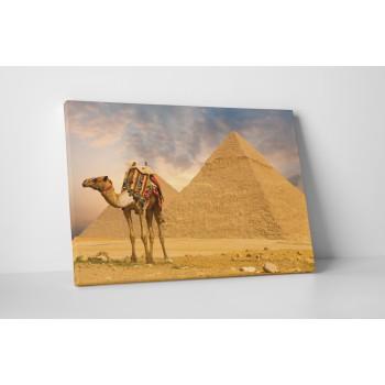 Velbloud mezi pyramidami