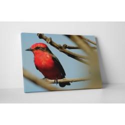 Piros madár