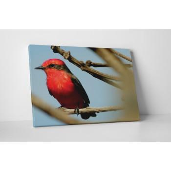 Červený pták