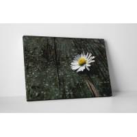 Kamilla virágocska