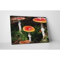 Színes gombák