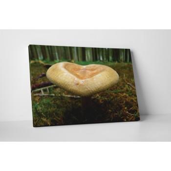 Zajímavá houba