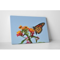 Színes pillangó