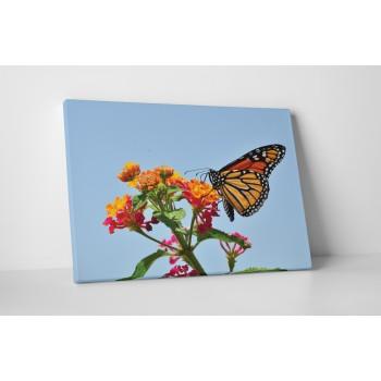 Barevný motýlek na květu