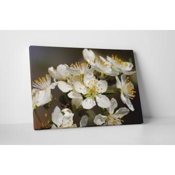 Fehér virágú bokor