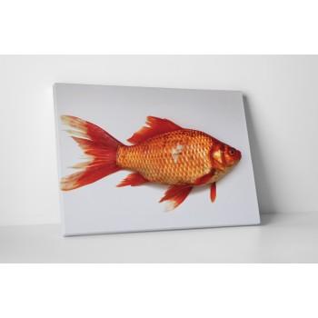 Červená ryba