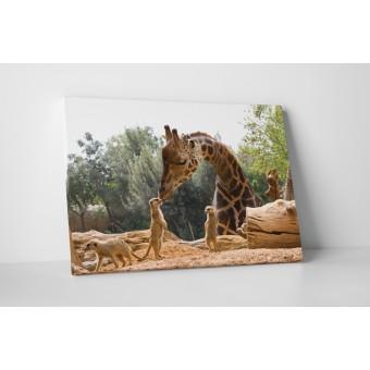 Állatkerti pillanatkép