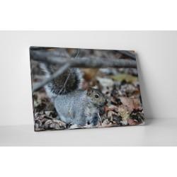 Kicsi mókus