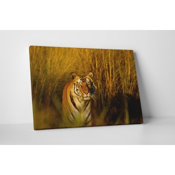 A tigris