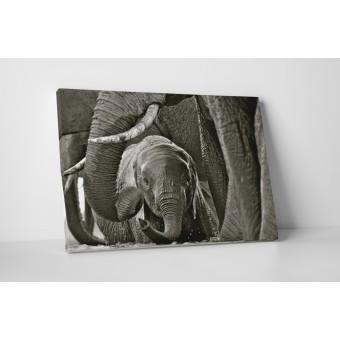 Bébi elefánt