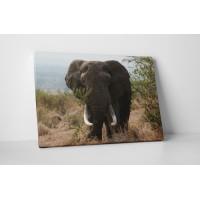Óriás elefánt