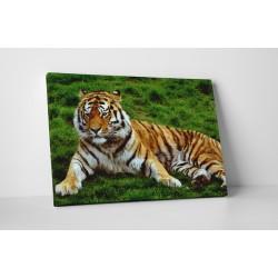 Pihenő tigris