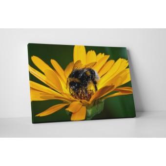 Gerbera és méhecske