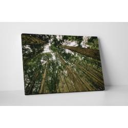 Magas erdő