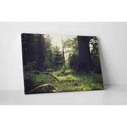 Mohás erdő