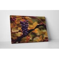 Érett szőlő