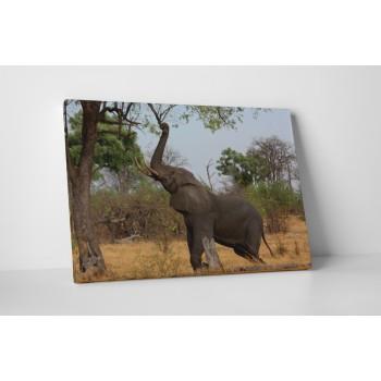 Nyújtózó elefánt