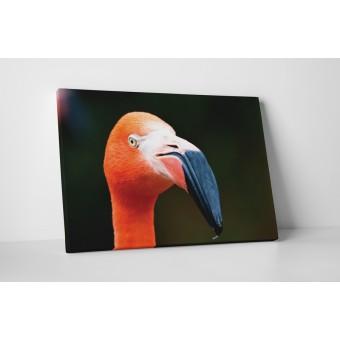 Flamingó portré