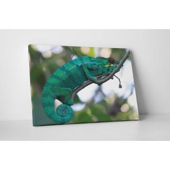 Chameleón na větvi