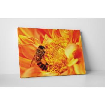 Szorgos méhecske a virágon