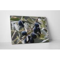 Fekete olivabogyók