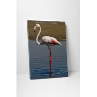 Magányos flamingó
