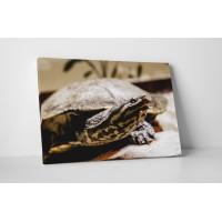 Kíváncsi teknősbéka