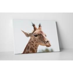 Szimpatikus zsiráf
