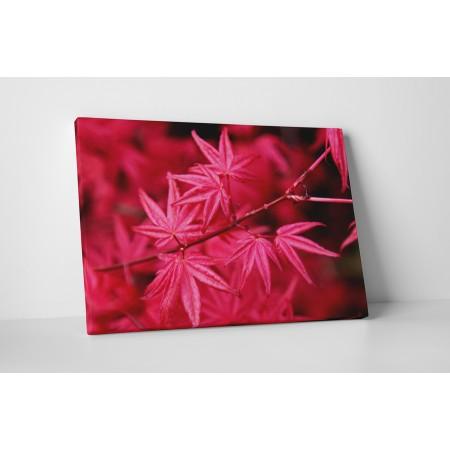 Vörös juharfa levelek