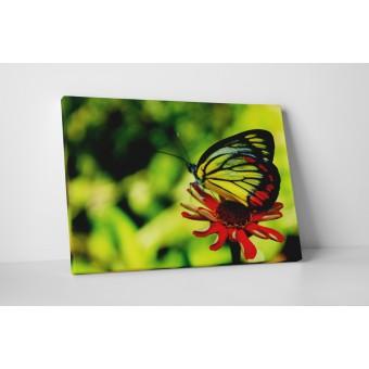 Piros gerbera és a pillangó