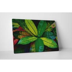 Zöldellő szobanövény