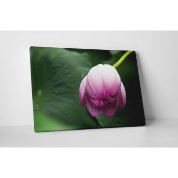 Ébredező virágbimbó