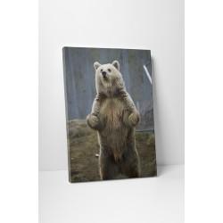 Kíváncsi medve