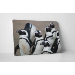 Pingvin csoport gyülekezése