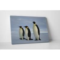Topogó pingvinek