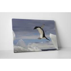 Repülő pingvin