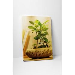 Stílusos bonsai