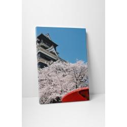 Sakura virágzás tavasszal