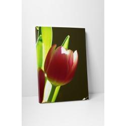 Apró tulipán
