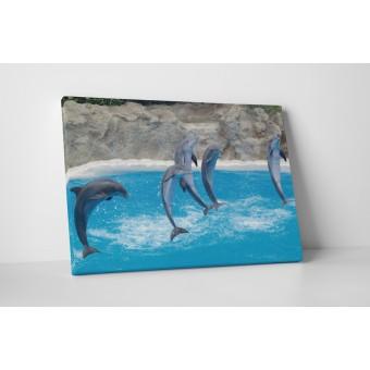 Delfin mutatvány