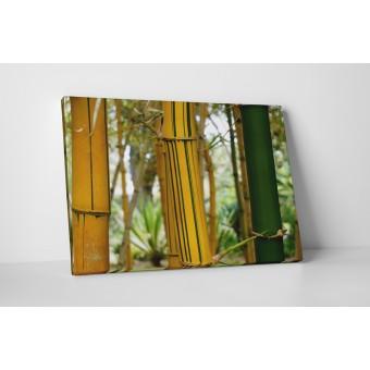 Csíkos bambuszok