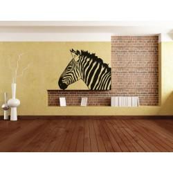 Gyönyörű zebra