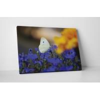 Fehér pillangó