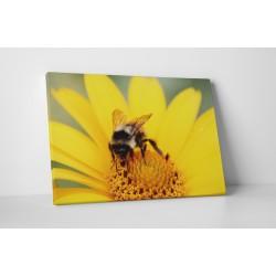 Dolgozó méhecske