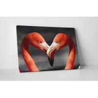 Szerelmes flamingók