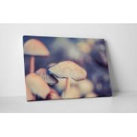Finom gombák