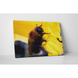 Munkás méhecske