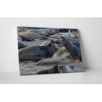 Oroszlánfókák