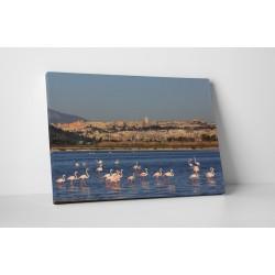 Flamingó család